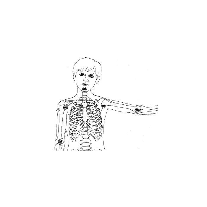 Skelett, Gelenke und Muskeln